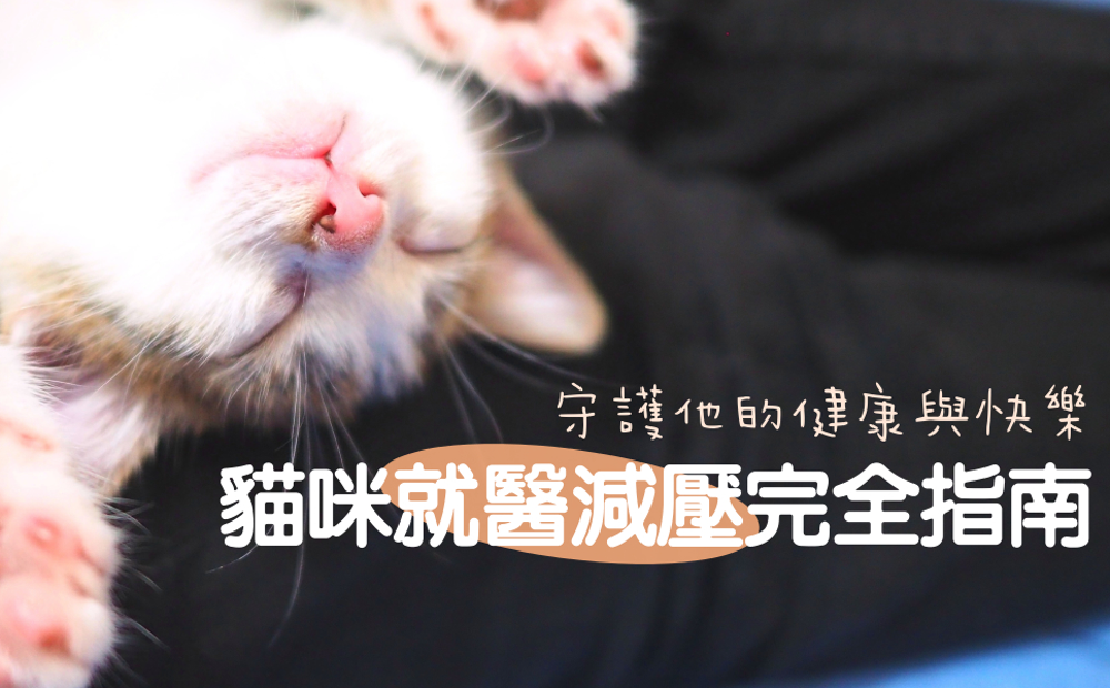 貓咪就醫減壓完全指南
